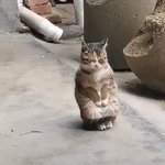 猫のかわいい姿思わず温めてあげたいと思ってしまう猫のかわいい動画はこちら