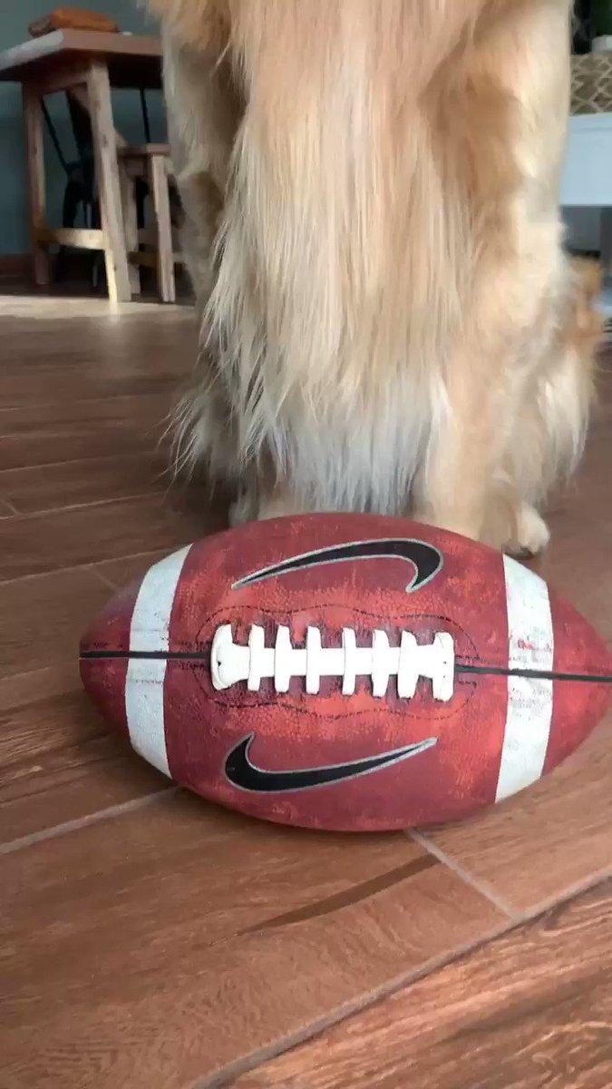 의 미디어: WHO'S GONNA WIN? 🏈🏆 #SuperBowlLIV #SuperBowl #Chiefs #49ers https://t.co/y3439ouhk0
