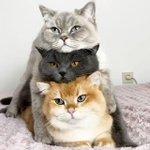 「だんご3兄弟」のような「にゃんこ3兄弟」が、カワイイから見てみて!