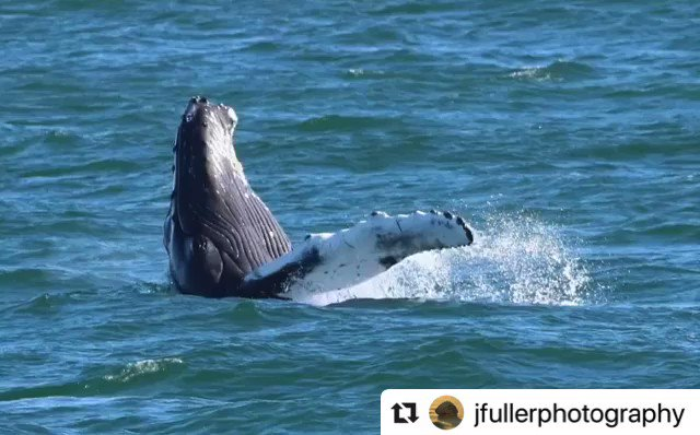 Whale hello there! Amazing photos captured by J. Fuller Photography with Rudee Tours! 🐋