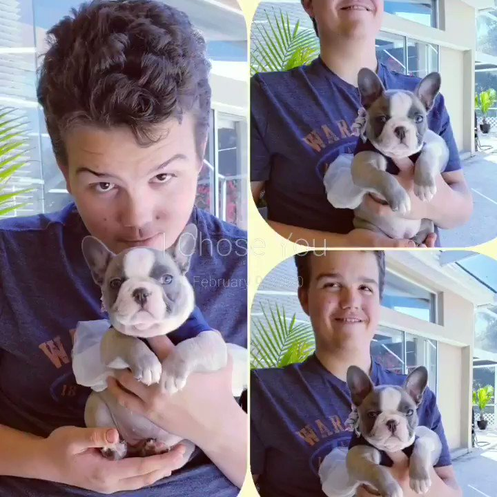 I Chose You! Nick and his Sugar Plum🌹❤ #PoppysPuppies #DogsofTwittter #frenchiesofinstagram #puppiesofinstagram #sugarplum