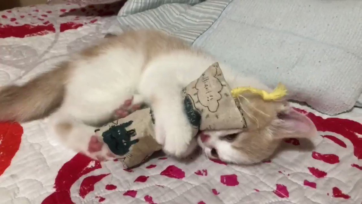 けりぐるみをキックする子猫