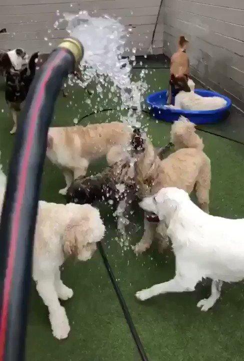 「ここには2種類の犬がいます」Here we have two types of dogsこうもハッキリ反応が違うのを見ると、やっぱり犬にもそれぞれ個性があるんだなぁと思う。