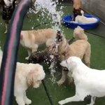 水遊びして大ハシャギの犬!一方…水遊びが嫌いな犬は?ビックリするくらい冷めた視線を送っていた!