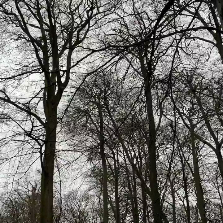 I love the sound of the wind through the trees. Something primordial about it. Up @WarleyWoods1 with Fly