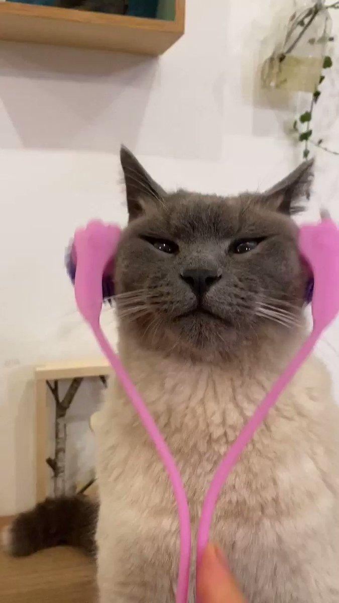 ただ猫がマッサージしてもらっているだけの動画。(。φдφ。)猫用マッサージ器をもらっちゃいました!