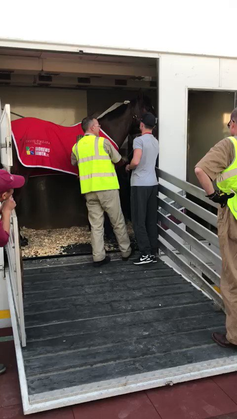 Gulliver has arrived safe and sound in Qatar in preparation for the Dukhan Sprint on Saturday!!