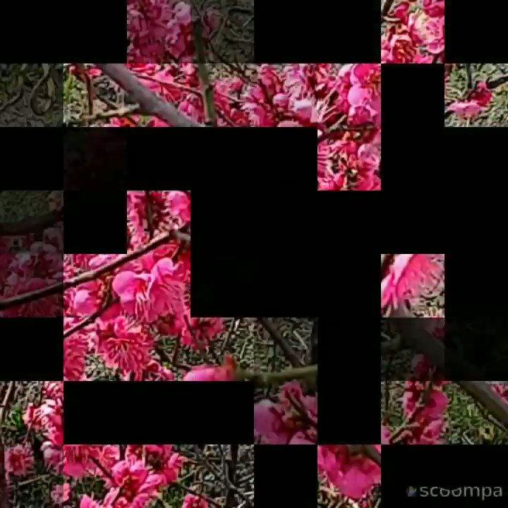 動画制作しました#花#花好きさんと繋がりたい#花壇の花Scoompa Videoで作成しました。