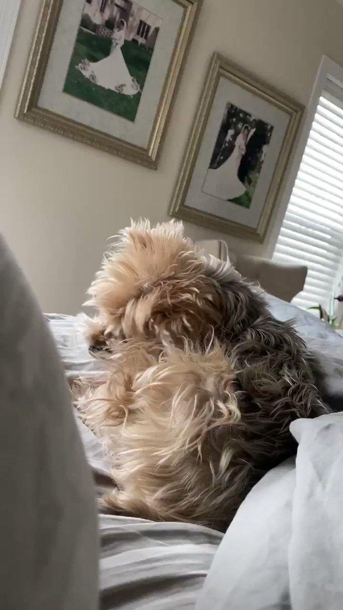 Good morning! #Doggo
