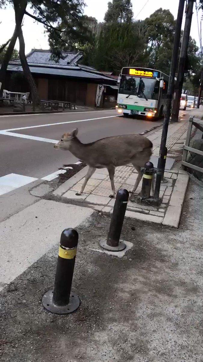 鹿「 渡りたいねん  」バス「ごめんやで   」車「  通るやで꒰ ´͈ω`͈꒱  」鹿「おおきに   」