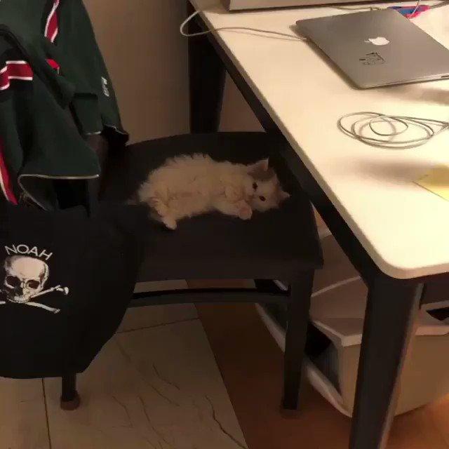 家に猫が転がっている幸せ