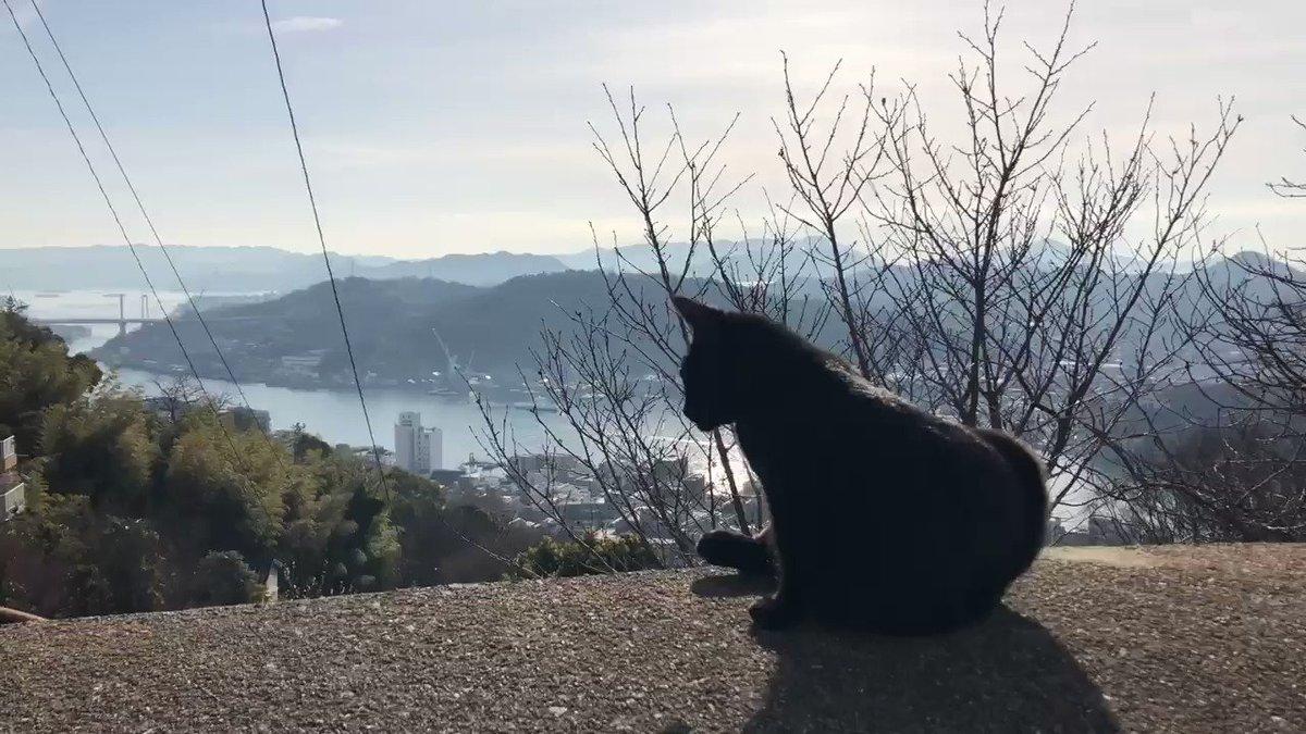『ひなたぼっこ😺basking in the sun 』(2020/2/19) 🎨朝日を浴びるケンちゃんでしたニャ。 #尾道 #尾道市立美術館 #黒猫 #cat #尾道水道