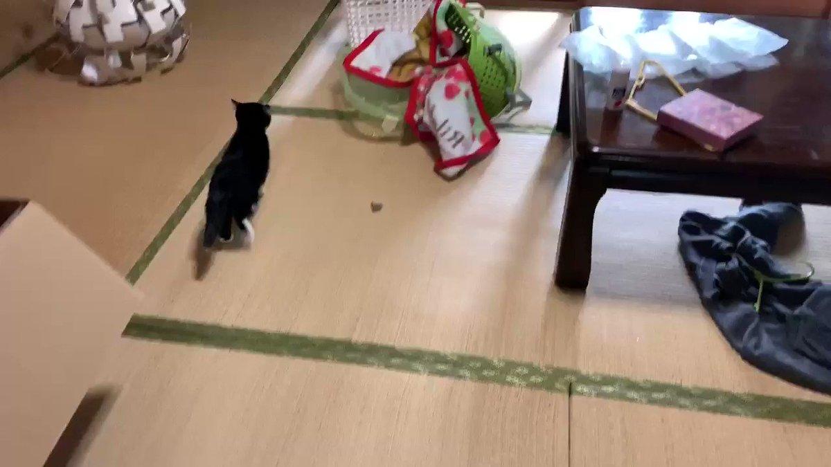 猫を飼っていない方はどうやったら猫がそんなに障子を破るのか理解できないですよね。この動画を見るとお分かりいただけると思います。