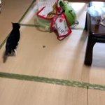 全猫を飼っていない人に告ぐ!どうやったら猫が障子に穴を開けまくるか?!
