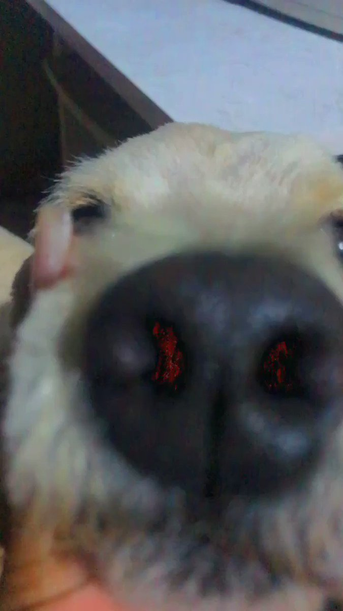 #meucachorro #cachorro #pet #meubb