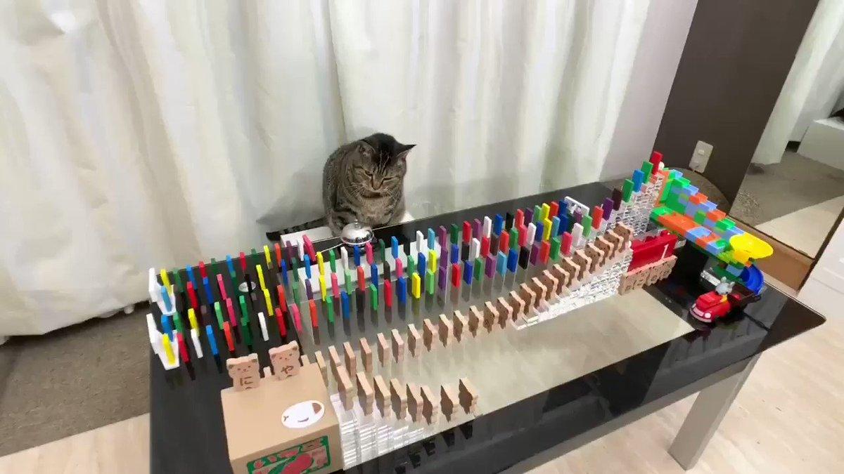 ニャタゴラスイッチ#猫の日#にゃんにゃんにゃんの日