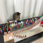 「ねこの日」にちなんだピタゴラスイッチをする猫がかわいい!!