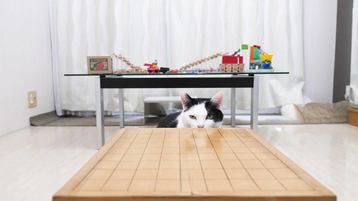 #猫の日 の将棋崩しの相手はやっぱり猫
