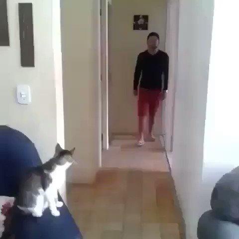 カッコ良すぎるネコ
