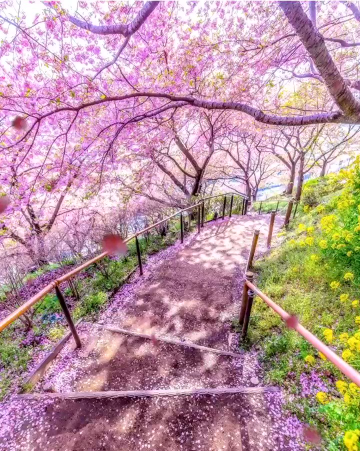 Faith is taking the first step Even when you don't see the whole staircase.  Martin Luther King, Jr. 📸Atsushi Kaneko