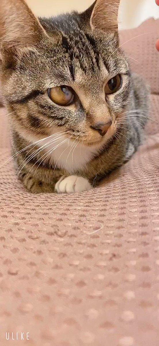 おはようございます(´ω`) ゆっくり寝れました今から軽めに朝御飯作ります 今日もどうぞよろしくお願いします #おはようございます #日曜日 #のんびり #にゃんすたぐらむ #ねこ好きさんと繋がりたい #ねこのきもち #ねこと暮らす #猫動画 #我が家の可愛い天使 #猫好き同盟pic.twitter.com/lbWq8oD2T0