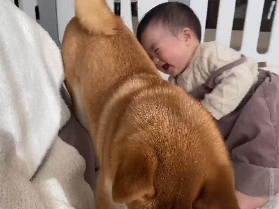 柴犬兄さんのモフモフっぷりは娘をも虜にしてしまうらしい