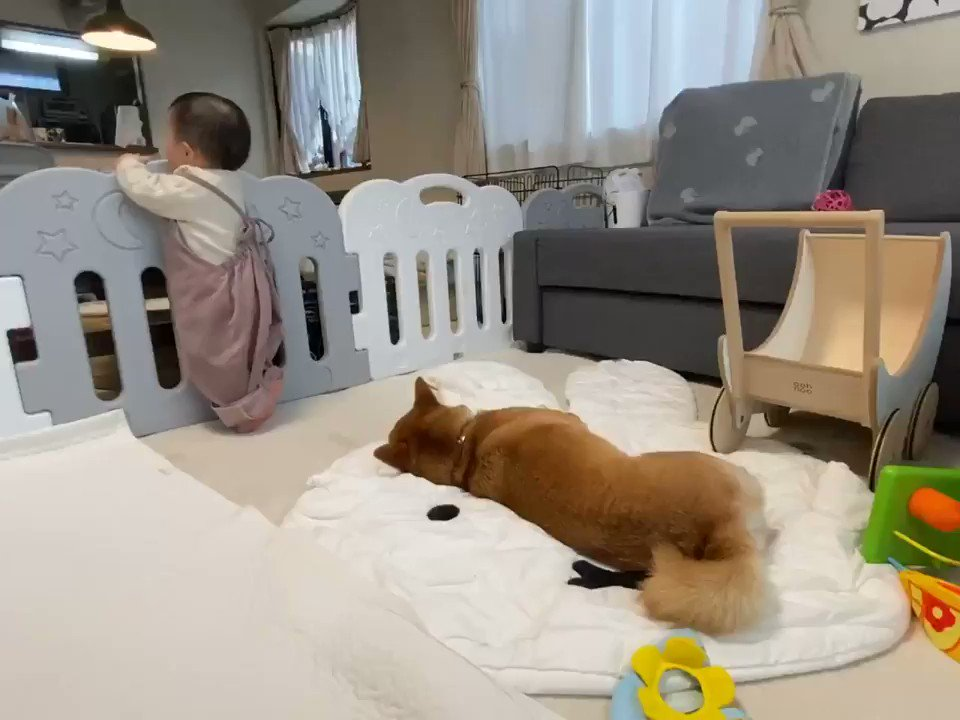 寝てる時たまに起こるあの現象は犬にも起こるらしい