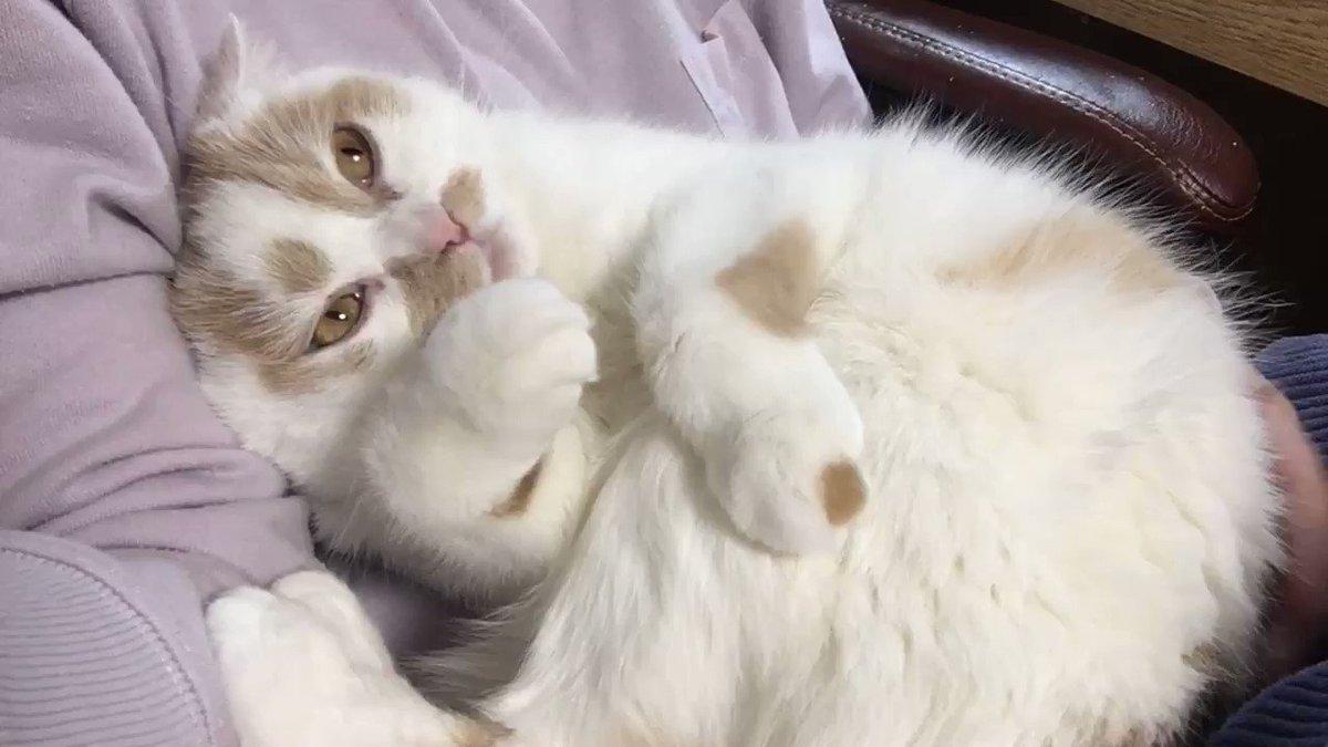 どんなに無理な体勢であろうと、どんなに腕がプルプルしようと、かわいいかわいい愛猫の姿を撮る。それが猫好き。