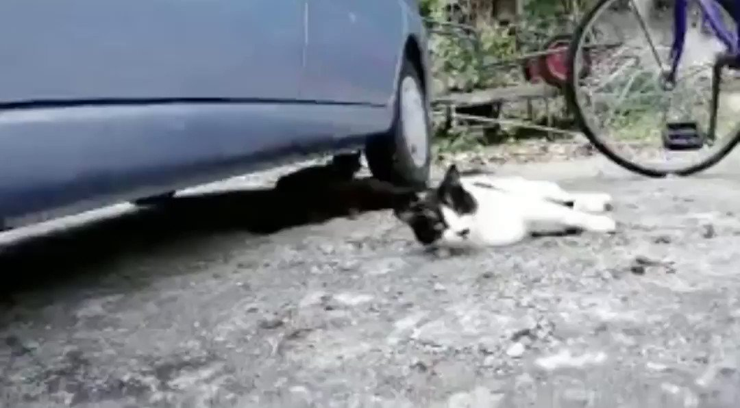噛まれて猫パンチを喰らった直後、すぐ助けてくれた紳士