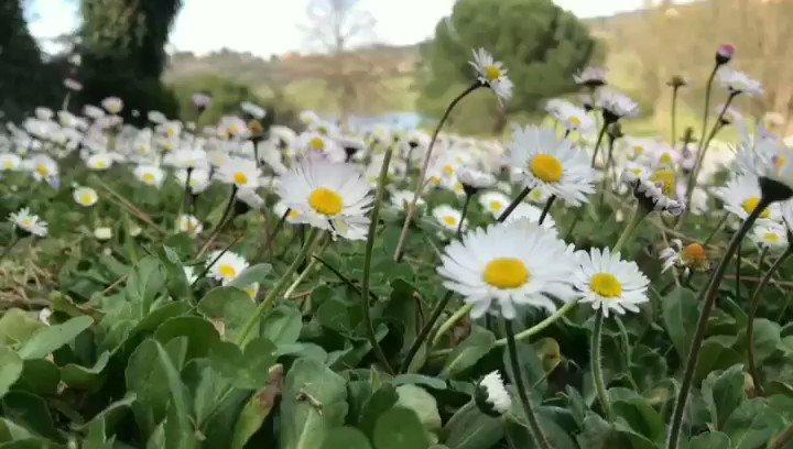 Livin' a green life @Castelgolf #nature #sky #sun #golf #beach #beautiful #pretty #sunset #sunrise #blue #flowers #night #tree #twilight #clouds #beauty #light #golfers #photooftheday #love #green #skylovers #dusk #weather #day #red #iphonesia #mothernature