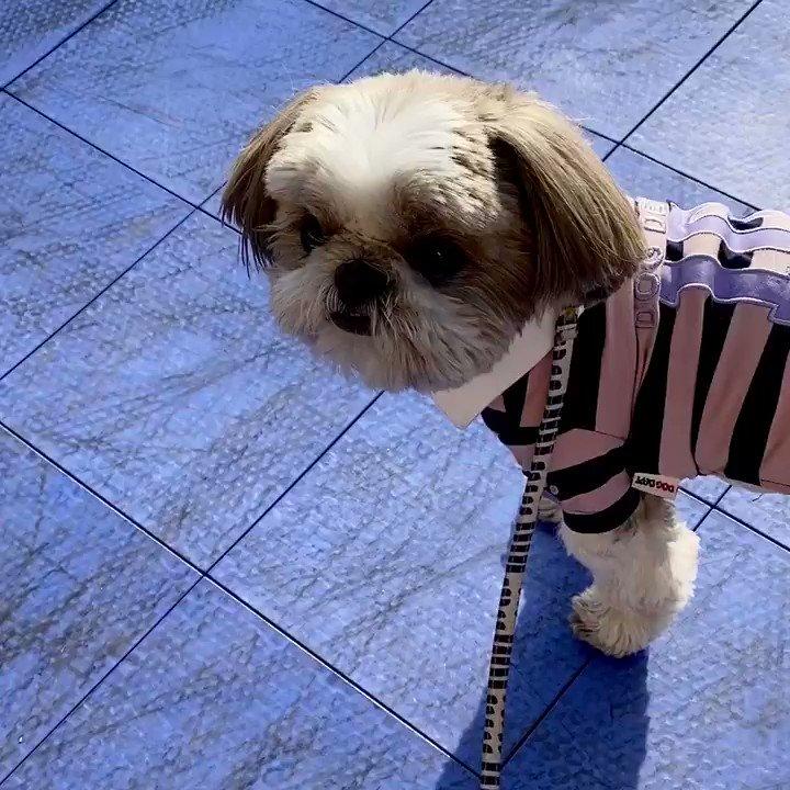 セーターを脱ぎ捨ててお出かけしたい気分😊🐶 #Dog #犬のいる暮らし
