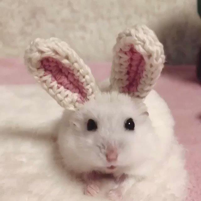 Who wants this cute bunny? 😇 #bunny #cute #funny #animalslover #hamster #bemorepanda