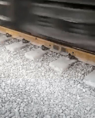 This is #scary  a #GoldenRetriever  #Puppy  was walking under a Moving #Train  :) ifb
