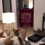 飼い主が目の前からいなくなるドッキリをされた猫の反応が予想外に面白い