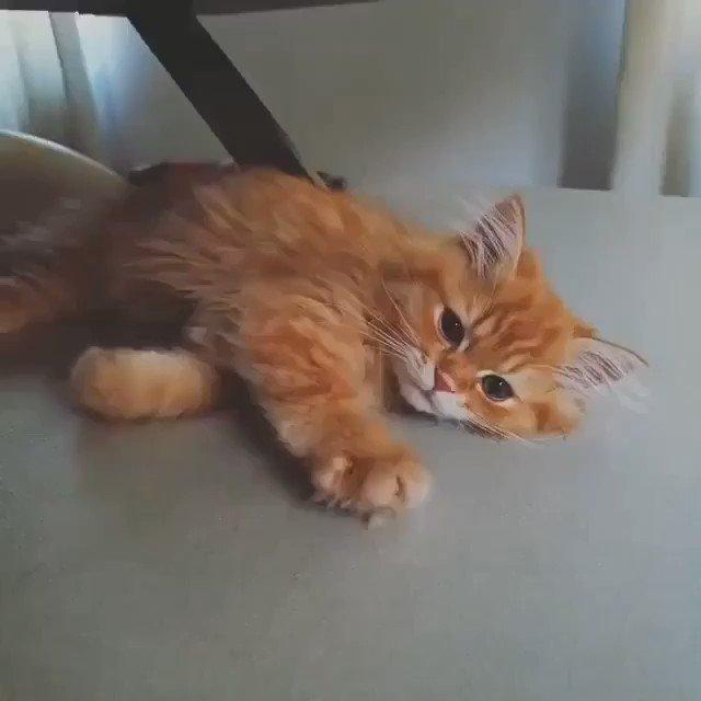 Fire cat❤️ #cat #fire #cute #adorable #catlover #bemorepanda