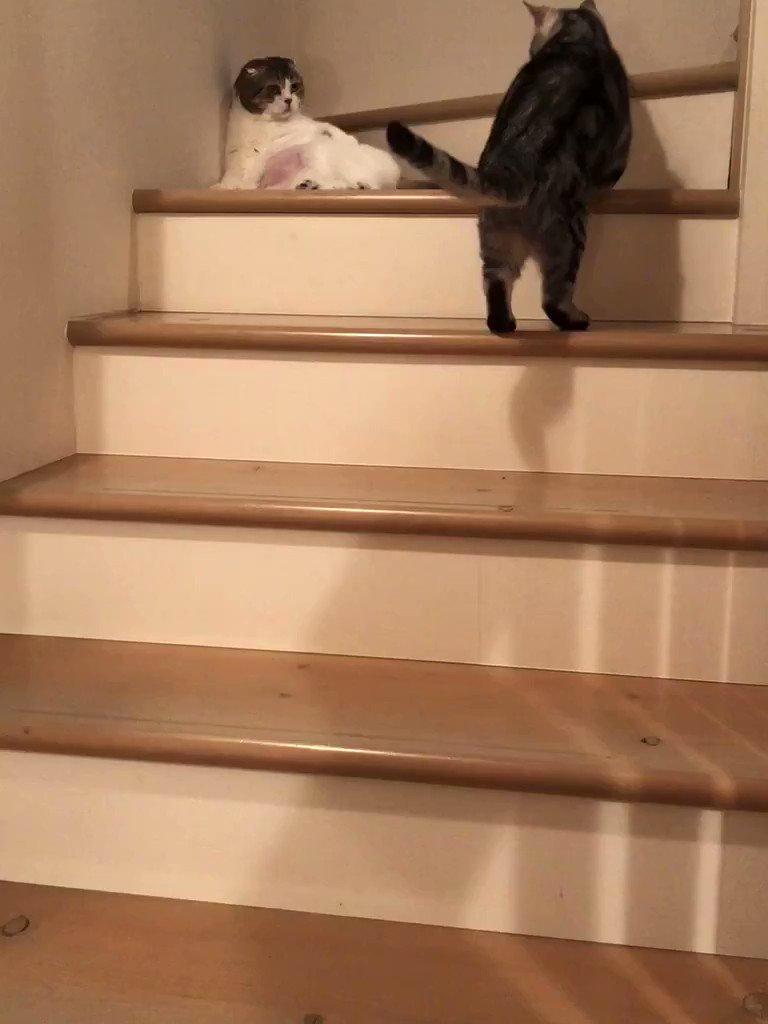 階段のどんぐり関所が突破され、ニャコムのパトロールが作動しました👮♂️