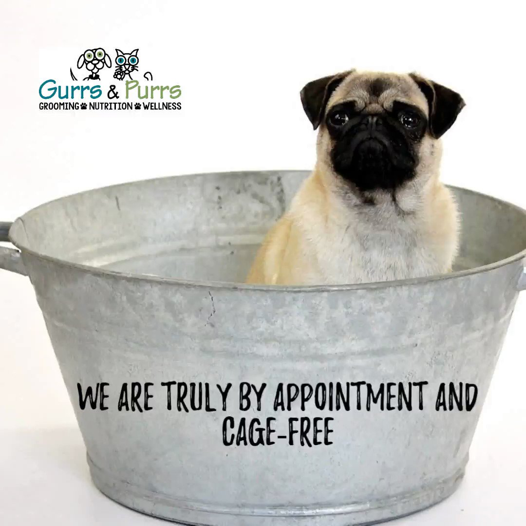 Grooming your pet on a regular basis is important. #grooming can help you identifying dry skin issues, possible skin cancer, or even ticks which is beneficial to your pet's #wellness and longevity. #healthyliving #health #happy #nutrition Call us for availability 386-738-9997