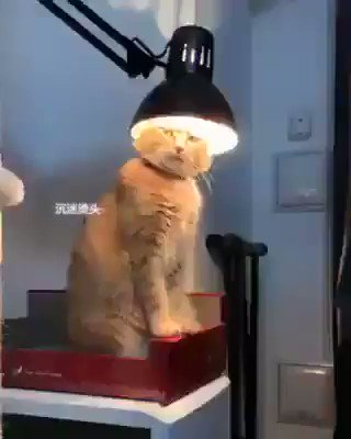 Leave me alone. I want to charge my brain. For more videos:   #cat #cats #CatsOfTwitter #catstagram #brains #animals #cute #pets #wednesdaymood #FunniestTweets
