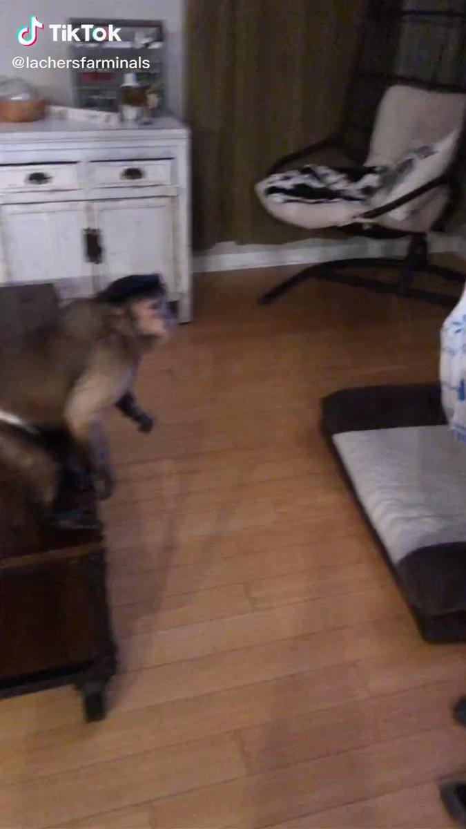 この猿、賢すぎる…