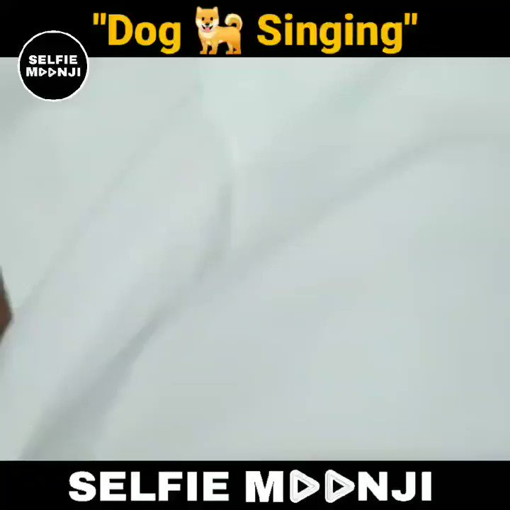 Dog 🐕 Singing 🤣🤣  #Dog #Doggy #DogSings #DogSinging