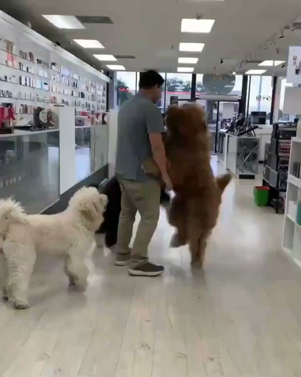 Big fluffy puppies want to be carried https/imgur.com/gallery/iutXb48