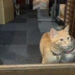 【かわいすぎだろ】窓からお迎えしてくれるにゃんこにメロメロだわ