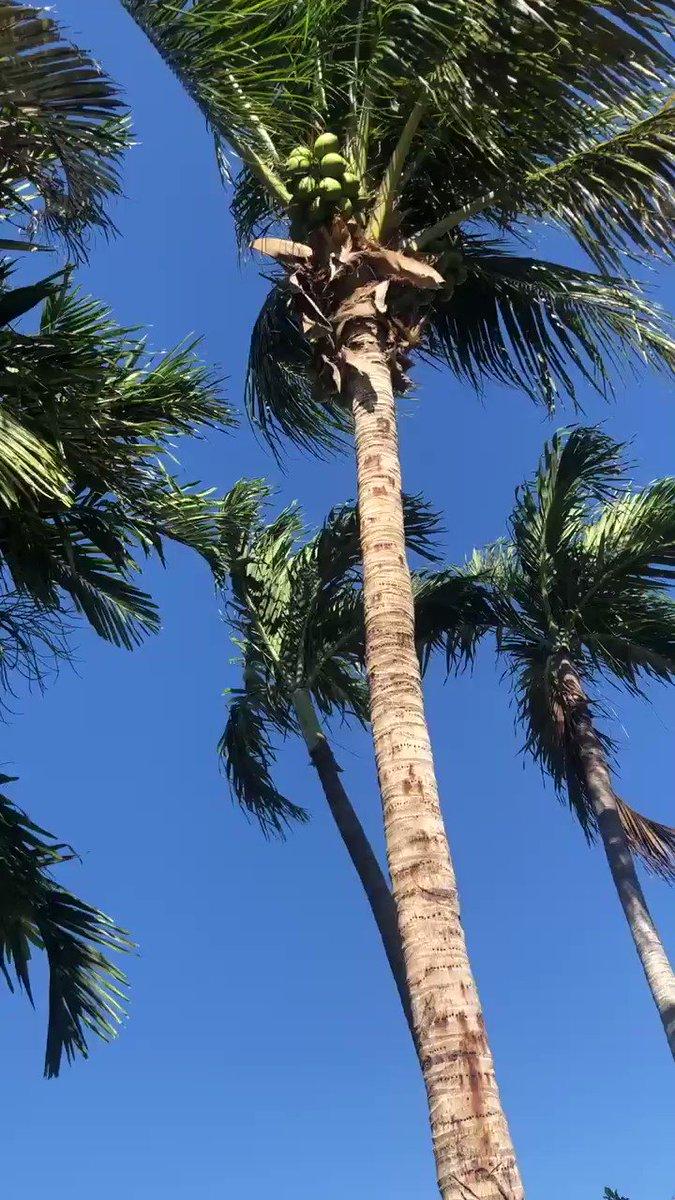 Enjoying this cool 😎 breeze. Happy TGIF 🌴 #friday #SouthFlorida #cool #flwx