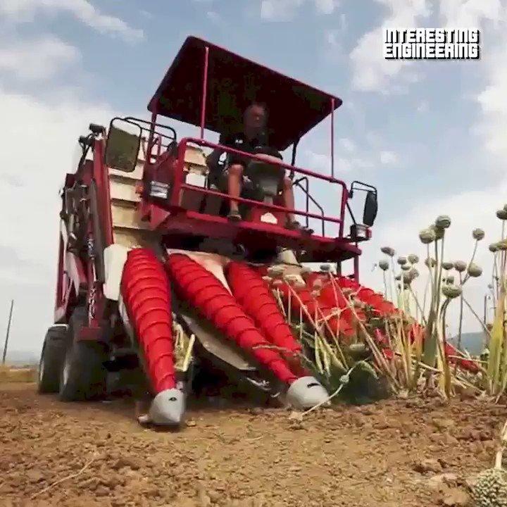 leave no onion behind 🧅  #futureofwork #agritech #robotics @Nicochan33 @Fabriziobustama @enricomolinari @GlenGilmore @labordeolivier @JeroenBartelse @AlbertoEMachado @segundoatdell @DrJDrooghaag @mvollmer1 @TerenceLeungSF @ShiCooks @DrJDrooghaag  https://t.co/BanGR2GC3O