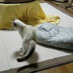 猫が自分の尻尾でエキサイトした結果?めっちゃ見られてた!