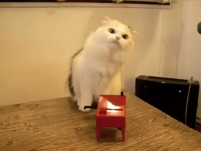 Cat Makes Music with Theremin
