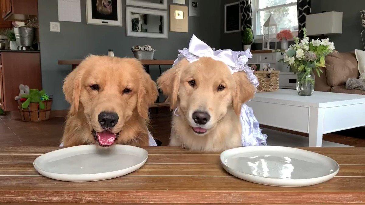 의 미디어: Wifee keeps eatin my foods! #dogs #dogsoftwitter https://t.co/LftwhF7NOj