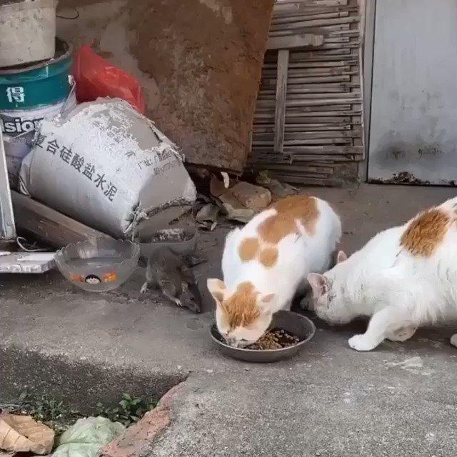 戸惑う猫★