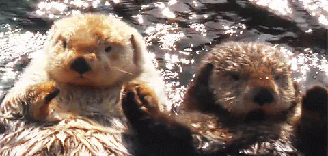 Image for the Tweet beginning: Sea otters hold hands so