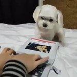 犬とタイピング競争をしてみたら?驚くべき結果に!